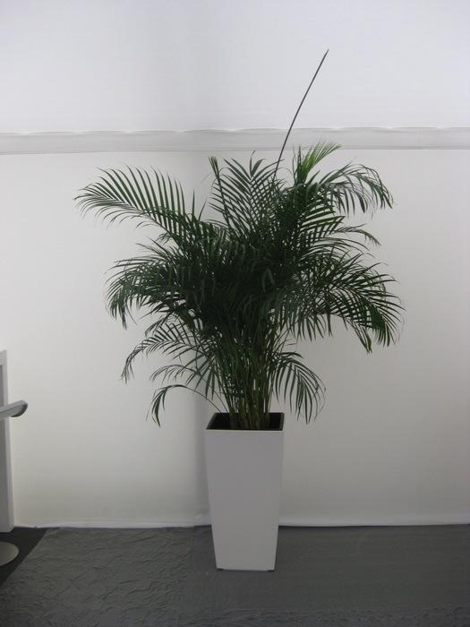 Blumen Boeder - Mietpflanzen Dekorationen Blumendekoration